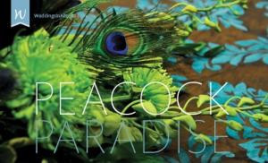 wiab_rw-peacock
